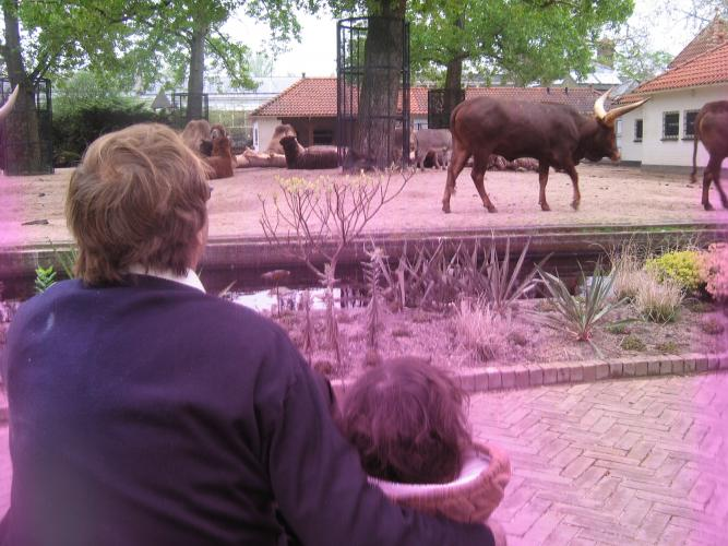 Claire watching the wilderbeasts at Amsterdam Zoo
